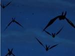 Bats Sai.jpg